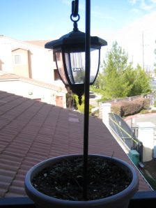 Melissa (Lemon Balm) with a solar light